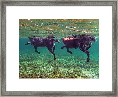 The Master And The Student Framed Print by Li Newton