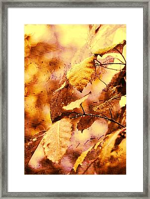 The Melody Of The Golden Rain Framed Print by Jenny Rainbow