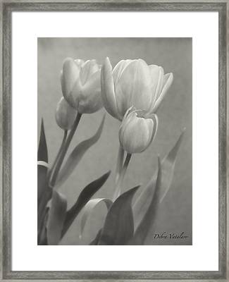 The Mirror Tulips Framed Print by Debra     Vatalaro