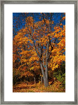 The Moment Of Glory Framed Print by Jenny Rainbow