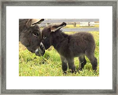 The New Arrival Framed Print by Shere Crossman