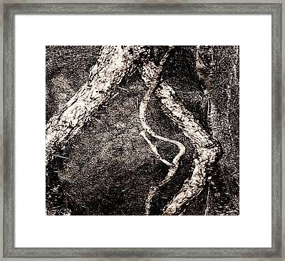 The Old Man Of The Woods Framed Print by Fine Art  Photography