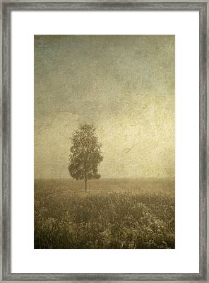 The One Framed Print by Jenny Rainbow