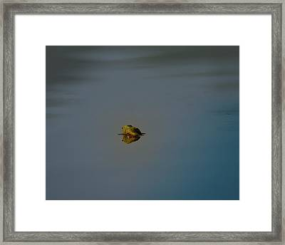 The Owl And The Pussycat Framed Print by Susan Capuano