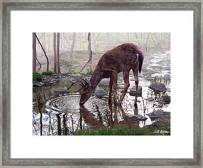 The Pause Framed Print by Bill Stephens