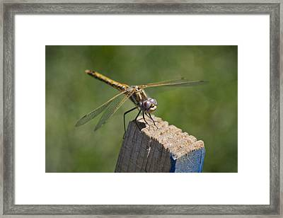 The Perch Framed Print by Priya Ghose