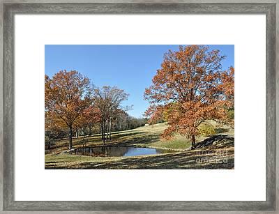 The Pond Framed Print by Denise Ellis