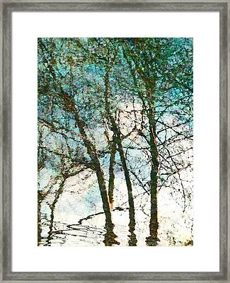 The Reflected Trees Framed Print by Steve Taylor