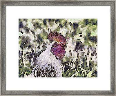 The Rooster Portrait Framed Print by Odon Czintos