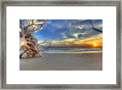 The Root Of Sunshine Framed Print by Sean Allen