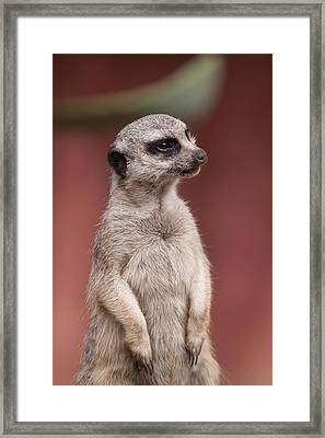 The Sentry Framed Print by Michelle Wrighton