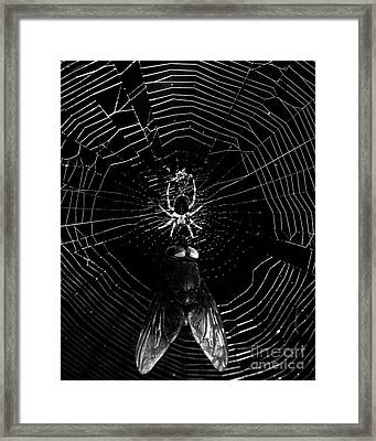 The Spider And The Fly . Black And White Framed Print by Wingsdomain Art and Photography