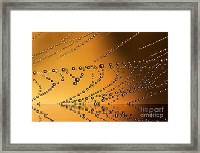 The Spiderweb Reflections Framed Print by Odon Czintos