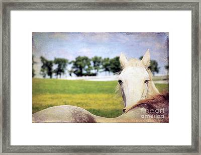 The Stare Framed Print by Darren Fisher