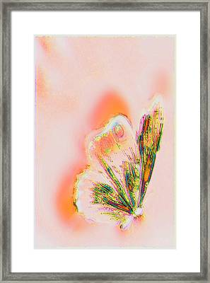 The Vibes Of A Butterfly's Mind Framed Print by Li   van Saathoff