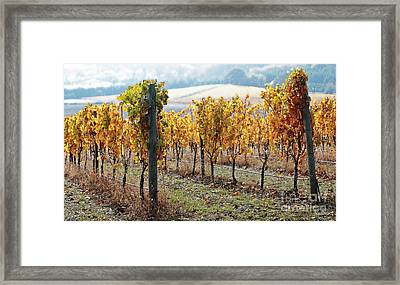 The Vineyard Framed Print by Margaret Hood
