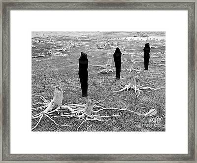 The Visitors Framed Print by Bob Christopher