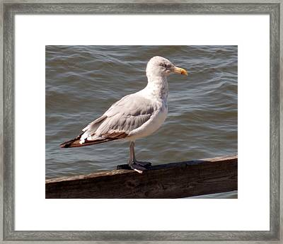 The Watcher Framed Print by Angelika MacDonald