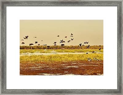 The Wetlands Framed Print by Douglas Barnard