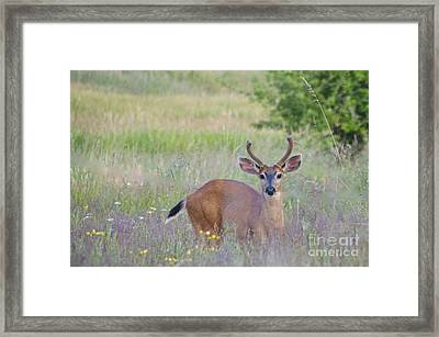 The Yearling Framed Print by Sean Griffin