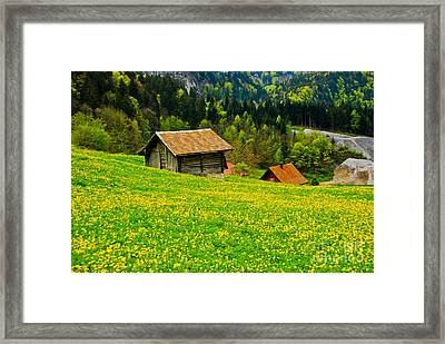 The Yellow Around Framed Print by Syed Aqueel