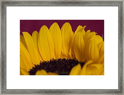 The Yellow Blossom Leaves Framed Print by Andreas Levi
