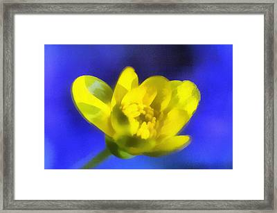The Yellow Buttercup Framed Print by Odon Czintos