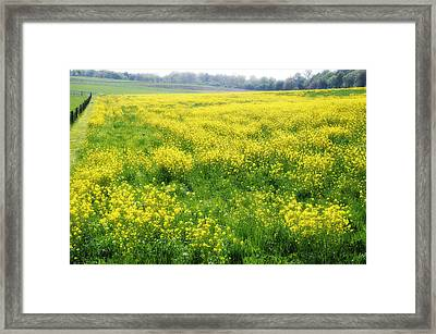 The Yellow Pasture Framed Print by Bill Cannon