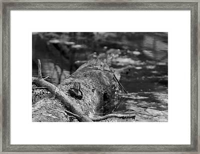 There Is A Frog On The Log Framed Print by LeeAnn McLaneGoetz McLaneGoetzStudioLLCcom