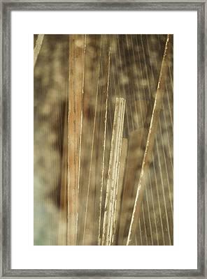 Thin Veil Framed Print by Todd Sherlock