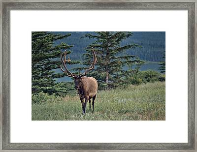 This Is Alberta No.19 - Taking A Stroll Framed Print by Paul W Sharpe Aka Wizard of Wonders