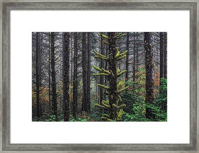 This Is British Columbia No.54f - Misty Mystical Moss Forest IIi Framed Print by Paul W Sharpe Aka Wizard of Wonders