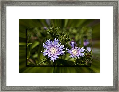 Thistle 131 Framed Print by Charles Warren