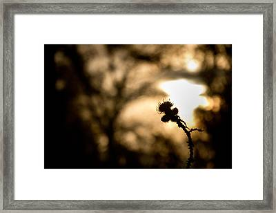 Thistle And Weeds Framed Print by Justin Albrecht