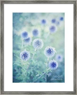 Thistle Dreams Framed Print by Priska Wettstein