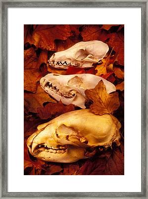Three Animal Skulls Framed Print by Garry Gay