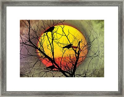 Three Blackbirds Framed Print by Bill Cannon