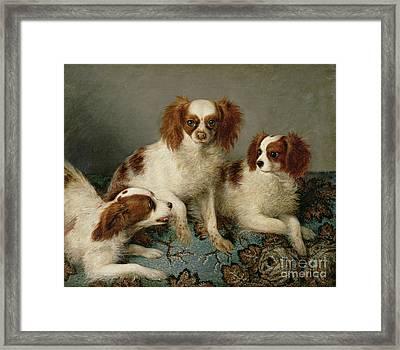 Three Cavalier King Charles Spaniels On A Rug Framed Print by English School