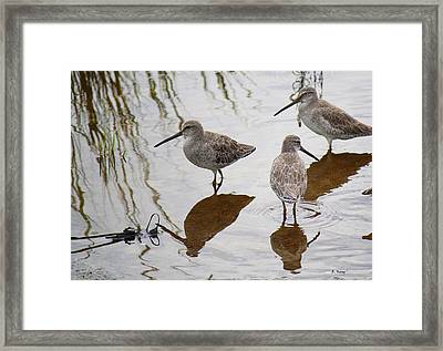 Three Long Billed Dowitchers Framed Print by Roena King