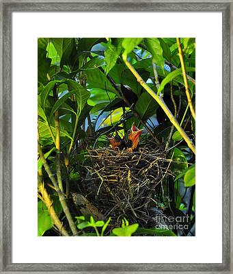 Three Of A Kind Framed Print by Al Powell Photography USA