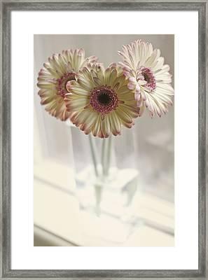 Three On A Windowsill Framed Print by Rebecca Cozart