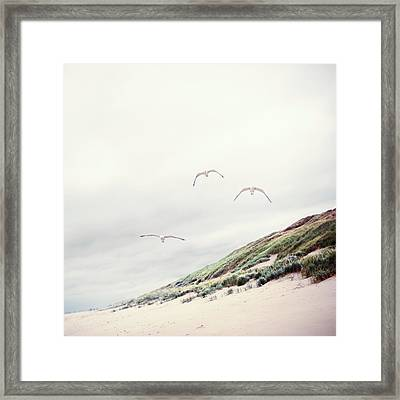 Three Seagulls At Beach Framed Print by Elisabeth Schmitt