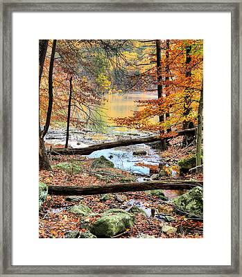 Through The Trees Framed Print by JC Findley