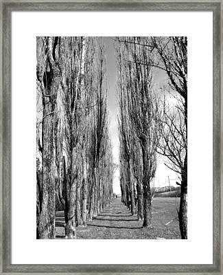 Through The Trees Framed Print by Jonathan Lagace