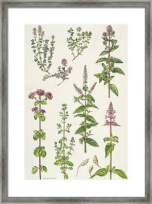 Thyme And Other Herbs  Framed Print by Elizabeth Rice