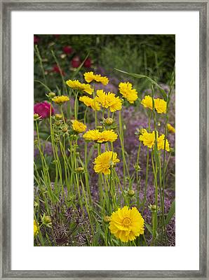 Tick Seed 2229 Framed Print by Michael Peychich