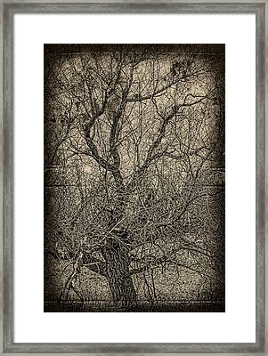 Tickle Of Branches  Framed Print by JC Photography and Art