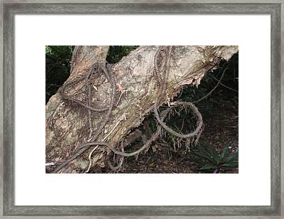 Tied Nature Framed Print by Lorenzo Muriedas