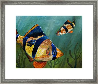 Tiger Barbs Framed Print by Anthony Cavins
