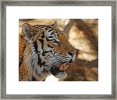Tiger De Framed Print by Ernie Echols